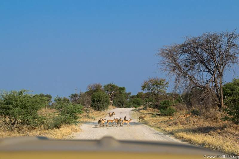 The Best Time To Visit Botswana & Essential Travel Tips