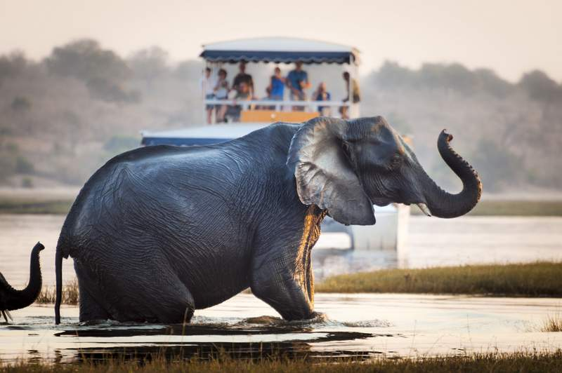 Things to do in Maun Botswana - Maun River Cruise