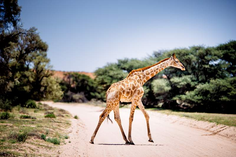 Road trip in Botswana - Everything You Need To Know About Driving In Botswana