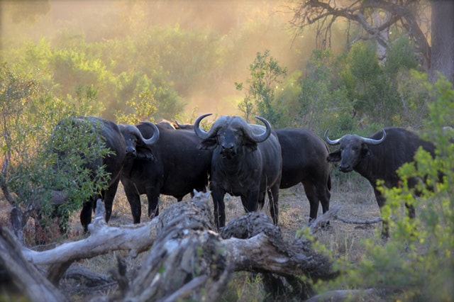 15 Important Things To Consider When Planning A Trip To Africa - How To Plan The Perfect Trip!