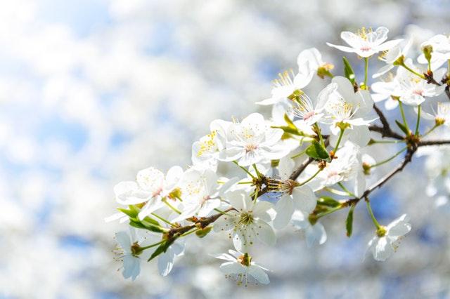 Blossom European Tour