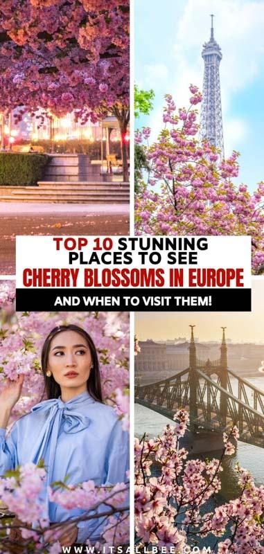 European cherry tree